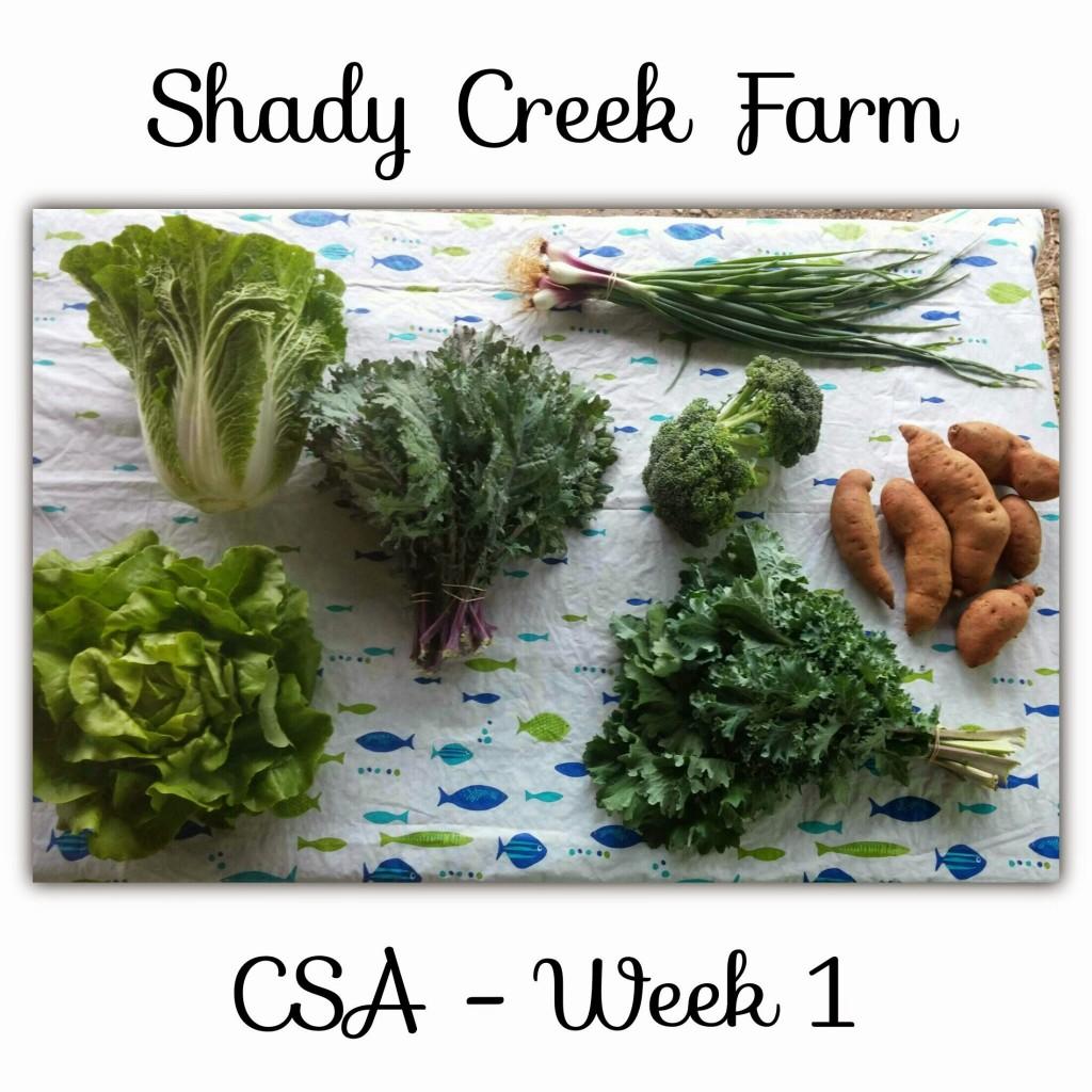 CSA week01